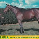 Nashua Postcard Champion Thoroughbred Horse Spendthrift Farm