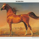 Arabian Horse Print Poster by Gladys Brown Edwards