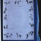 Pinto Horse Pedigree Charts Five-Generation Set of 5