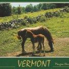 Vermont Mare & Colt Postcard Morgan Horses Scenic