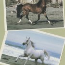 Arabian Horse Running Lot of Two Postcards Equine