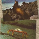 Post Cards Lot of 4 Sea Lion Crab Bird Galapagos Ecuador