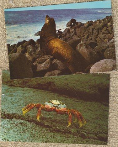 Post Cards Lot of 4 Sea Lion Crab Bird Galapagos Ecuador
