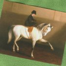 Post Card LADY RIDES SIDESADDLE Horse Dressage Equestrienne