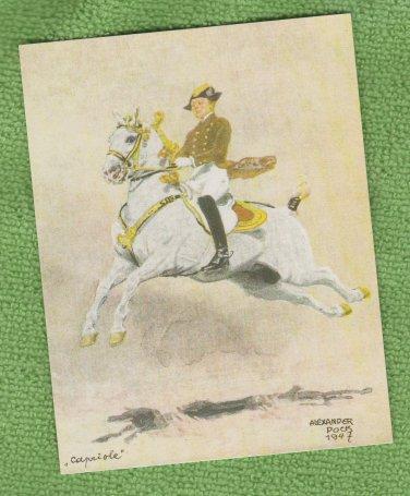 LIPPIZZANER POSTCARD Horse Capriole