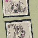 Lot of 2 Polska Postage Stamps Poland Dogs Schnauzer English Setter