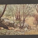 Black-Tailed Deer Postcard Museum Exhibit Golden Gate Park