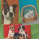 Dogs Puppies Postcards Boston Terrier Lot of Three
