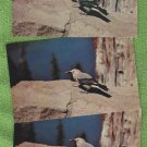 Bird Postcards CLARK'S NUTCRACKER Vintage Wildlife Chrome