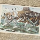 Sea Gulls Miniature Art Postcard Birds Wildlife Used