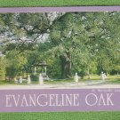Evangeline Oak Color Post Card Scenic St. Martinville, Louisiana