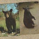 Two BLACK BEAR Postvards Vintage Wildlife Animals