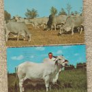 BRAHMA BULL CATTLE POSTCARDS FLORIDA LIVESTOCK FARM VINTAGE