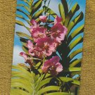 Orchid Flower Photo Postcard Unused Singapore Floral Southeast Asia