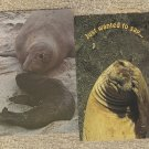 Elephant Seal Postcards Lot of 2 Wildlife Unposted