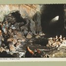 Sea Lion Caves Postcard Oregon Coast Wildlife