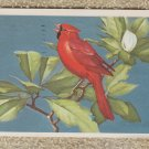 CARDINAL Postcard Song Bird Wildlife Vintage Postally Used