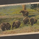 Grizzly Bear Family Postcard Vintage Yellowstone National Park