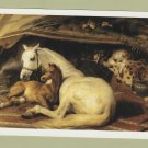 "Arabian Horse Postcard ""The Arab Tent"" Unused Miniature Art"