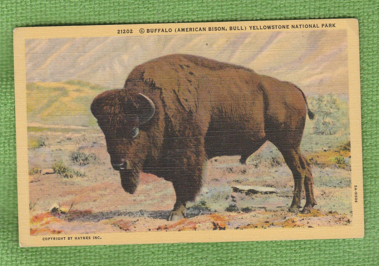 Bison Bull Buffalo Vintage Post Card Unused Yellowstone National Park