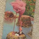 Postcard FLAMINGO NESTING IN FLORIDA HIALEAH PARK VINTAGE