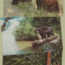 Lot of 3 BLACK BEAR POSTCARDS WILDLIFE YELLOWSTONE NATIOAL PARK