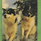 Sled Dogs Postcard Alaskan Husky Arctic North Animals GD
