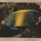 Blue Angel Fish Postcard Aquarium Scene Unused