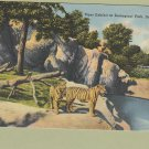 Tiger Exhibit Vintage Postcard Detroit Zoological Park Michigan