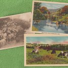 Lot of 3 Dairy Cows Vintage Potcards Wisconsin Pastoral Scenic