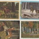 Vintage Deer Post Cards Lot of 4 Kaibaab Yosemite Animals