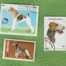 Wire Haired Fox Terrier Dog-Themed Postage Stamps Worldwide