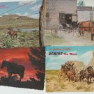 Horses Lot of 8 Post Cards Equine