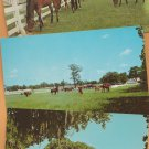 HORSES Lot of 14 Postcards Western Trail Riding Thoroughbreds Equine