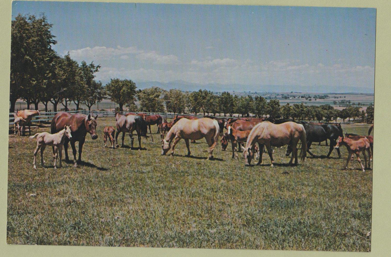 Mares & Foals Full-Color Photo Pastoral Scenic Horse Herd