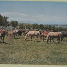 Mares & Foals Full-Color Photo Pastoral Scenic Horse Herd