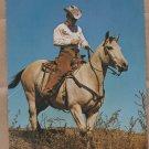 Quarter Horse Jumbo Postcard Western Cowboy