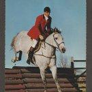 Hunter / Jumper Horse Jumbo Postcard Equine Fox Hunting