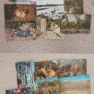 Animals Vtg Postcards Wildlife Deer Rabbits Birds