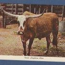 Texas Longhorn Steer 1972 Vintage Postcard
