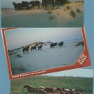 Wild Ponies Horses of Corolla Postcards Outer Banks Ocracoke North Carolina