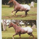 "Appaloosa Horse Colorful Postcards Trotting / Running ""Designestry"""