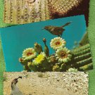 Lot of 3 Arizona Birds Postcards Elf Owl, Cactus Wren, Gambel's Quail