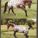 Beautiful Appaloosa Horse Photo Postcards Mare Collection