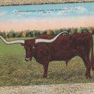 Texas Longhorn Steer Linen Ranch Cattle Vintage Postcard GD Postmarked