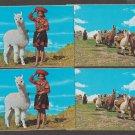 Lot of 4 ALPACA Post Cards LLAMAS Animals Cusco Peru Unused