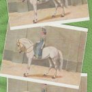 CIRCUS PERFORMER WOMAN RIDES SIDESADDLE POSTCARDS
