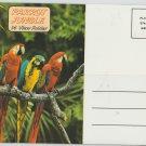 Parrot Jungle Postcard Folder Beautiful Birds Flamingos Macaws Miami Florida