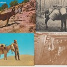 Lot of Postcards Donkeys Burros Mules Mining Packing
