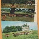 Deer Park Postcards Denmark, Germany, Wildlife, Eremitage Palace Dyrehaven
